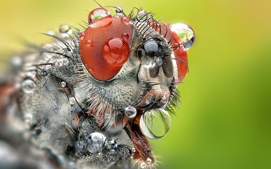 What is Macro Photography